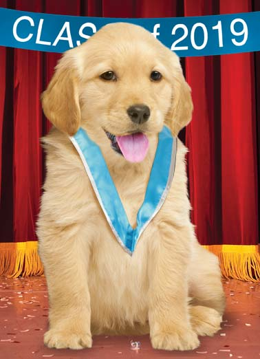 Golden Dreams Funny Graduation   graduation congratulations golden retriever puppy stage confetti sash success stage dream dreams come true dog May all your dreams be Golden! Congratulations