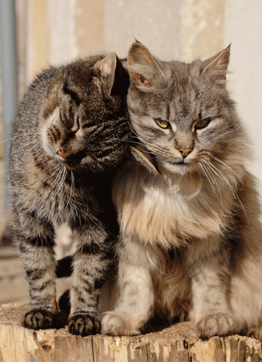 Good Friend To Lean On Funny Cats Card For Any Time Let someone know you're thinking of them with a personalized greeting card! | social distancing friendship quarantine anyone pals buds missing you  Good friends are always there to lean on.