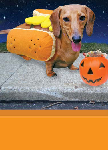 Halloween's Here Funny Halloween   A dachshund wearing a hot dog costume on halloween. | dog k9 dachshund wiener candy scary night moon halloween hotdog hot  Hot Dog... Halloween's here!
