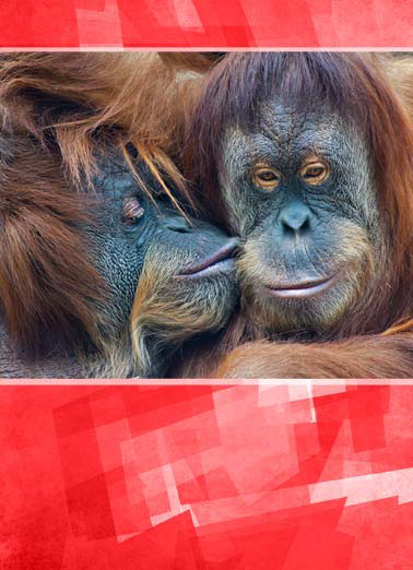 Funny Valentine's Day Card Love An orangutan kissing another on the cheek | animal cute orangutan orange love valentine valentine's day hanging hangin kiss cheek hug heart hearts red, Honey, even though you drive me bananas, I just love hangin' with you