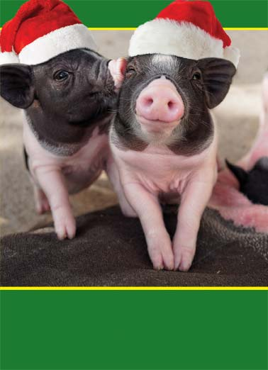 Hogs and Kisses (H) Funny Happy Holidays   Picture of two cute pigs with santa hats. | Happy Holidays with Hogs and Kisses Santa hat hats pig hog hug kiss holiday Happy Holidays with Hogs and Kisses!