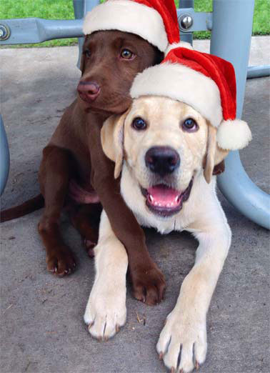 Holiday Hug Funny Dogs Card  Two dogs giving hugs while wearing santa hats. | dog holiday santa hug big loving  Sending you a Big Holiday Hug!