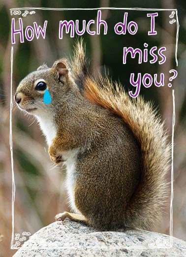 How Much Funny Miss You Card    More than a squirrel misses his nuts.
