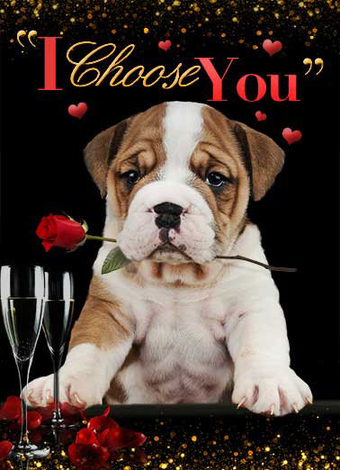 I Choose You Funny Valentine's Day Card For Anyone Funny Valentine's Card, The Bachelor, puppy, bulldog, hearts, kisses, love, valentine, adorable, sweet,  rose, flowers, valentine picture, photo, image, romantic, hearts, love, kisses, kiss, boyfriend, girlfriend, husband, wife, spouse, significant other, lover, bae, red, personalized valentine card, happy, picture, expression, greeting card, sweet, loving, for her, for him, goofy, hilarious, witty, meme, print, folded card, mail, recipient, february 14, special, wonderful, humor, warm, message, pet, dog, topical, fresh, cute, friend, for son, for daughter, for children, for child, for family, fun, real cards, printed, animal  ...To be my Valentine!