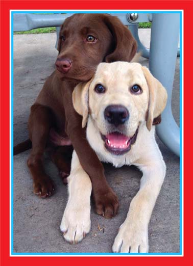 July Hug Funny Dogs Card  A picture of two dogs embracing each other. | dog dogs 4th of July hug big loving picnic bbq  Sending you a Big Loving 4th of July Hug!