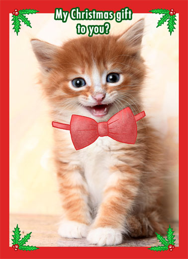 Kitten Bow Funny Christmas  Cats   It's me.  It's always me.