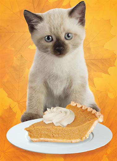 Kitty Pie Funny Thanksgiving  Cats