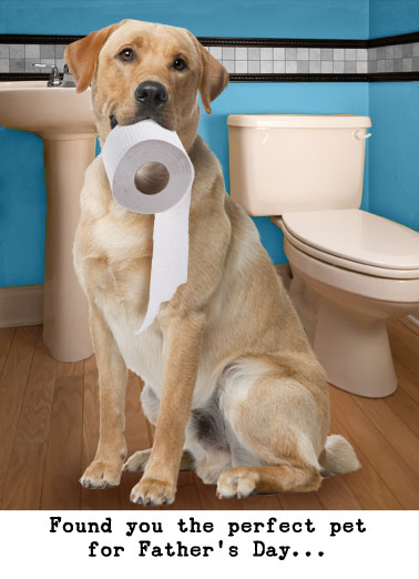 Lavatory Retriever (FD) Funny Father's Day Card Funny Animals A picture of a dog sitting in a bathroom with toilet paper in his mouth. | dog labrador retriever toilet paper funny bathroom pet sit sitting lavatory  A Lavatory Retriever.