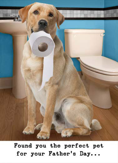 Funny Father's Day   bathroom dog lavatory retriever labrador toilet paper perfect pet dad father father's day, A lavatory retriever
