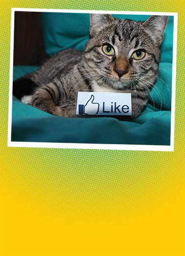 Cat Like Funny Photo Card  cat kitten thanks thank you like social media cute fun   Thank you.