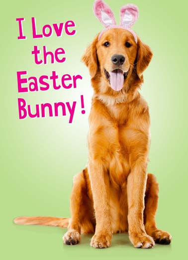 Love Easter Bunny Dog Funny Easter  Dogs  Tastes like chicken!