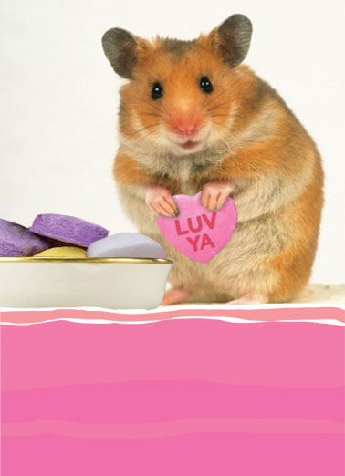 Little Heart (LV) Funny Love   A picture of a hamster with a candy heart in his hands that says 'luv ya'. | hamster love candy hearts little heart bottom sweet ...from the bottom of my little heart.