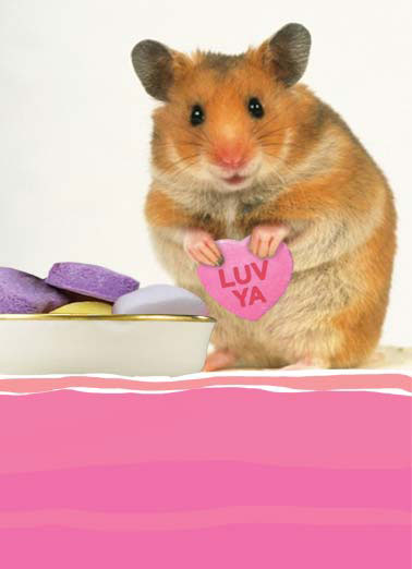 Funny Valentine's Day Card Love Gerbil holding a little heart that says luv ya | animal gerbil love luv ya heart hearts little candy valentine valentine's day , ...from the bottom of my little heart