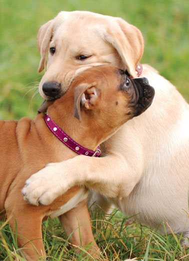 Little Hug Funny For Any Time Card Dogs A picture of two dogs embracing each other in a grass field. | dog collar hug embrace little grass from me you Just a little hug from me to you.