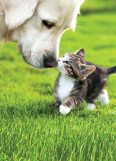 Funny Simply Cute Card  Friends, Cute, Animals, Dogs, Cats, Kiss, Fuzzy, Cute,  Sending you a little kiss to wish you a very Happy Birthday.