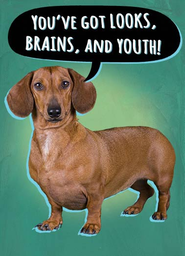Looks Brains Youth Funny Dogs Card    That makes YOU the big wiener!  Happy Birthday