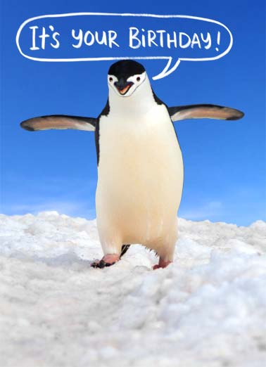 Love You This Much Funny  Card  A picture of a penguin with its wings outstretched and saying, 'it's your Birthday' | penguin love you this much happy birthday ice snow winter wing wings  ...And I love you this much.
