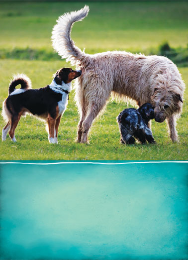 Makes Friends BD Funny Dogs Card  Picture of three dogs smelling each other. | smell sniff dog dogs scent butt play tail make friends birthday  Happy Birthday to a guy who makes friends wherever he goes.