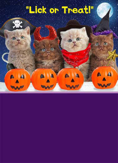 Meowloween Funny Halloween Card  4 cats dressed up in pirate, cowboy, devil, and witch halloween costumes saying 'lick or treat!' | halloween pumpkin candy sweet scary cat feline pirate hook hat devil cowboy bandana wand meow moon star stars Happy Meowloween
