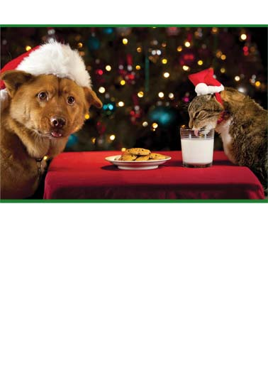 Milk It XMAS Funny Cats Card Christmas A dog and a cat wearing Santa caps with milk and cookies. | cat dog Santa milk cookies drink gift present XMAS drink Christmas tree lights ornaments ornament Christmas is here... Milk it for all you can!