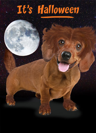 Moonlight Dachshund Funny Halloween   Send a spooky Halloween Wiener Card |Wiener, Dachshund, Dach, Dox, Halloween fun, LOL, meme, spooky, moon, wolf, werewolf, cute, puppy, dog, humor