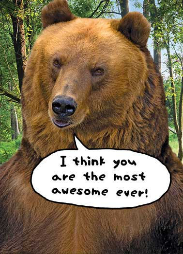 Most Awesome Ever Funny Thank You Card  bear woods trees thanks thank you thanks thank you fun biased   Bear in mind. I'm biased. Thank You.