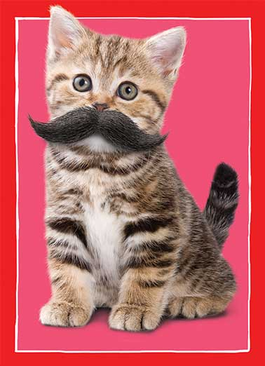 "Mustache Cat Funny Valentine's Day Card For Kid   I Moustache You... ""Will you be my Valentine?"""