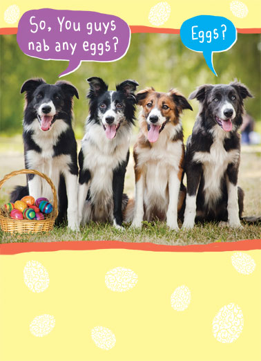Nab Eggs Funny Dogs Card Easter Four dogs looking for easter eggs with one mishearing the others. | dog easter egg eggs legs basket I thought we were looking for some legs!