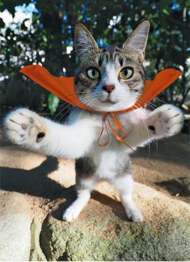 On It's Way (H) Funny Halloween   A picture of a cat wearing a cap with arms reaching out to give you a big hug on halloween. | cat feline hug halloween big cape hero   Sending a BIG Halloween Hug your way today!