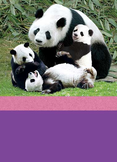Funny Mother's Day Card  ,  It's Mother's Day - take a break from the Panda-monium and celebrate!