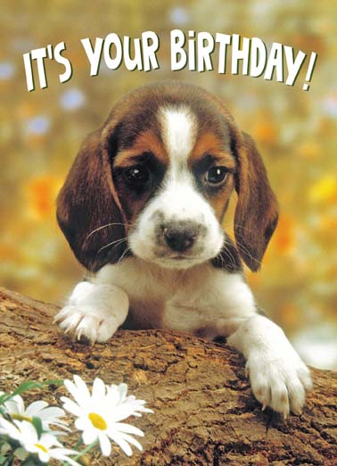 Paws to Celebrate Funny Birthday Card Dogs Cute puppy dog wants you to paws and celebrate your birthday on this sweet birthday card, say happy birthday from this cute puppy who wants you to paws to celebrate, paws to celebrate your birthday, Don't forget to Paws to celebrate!