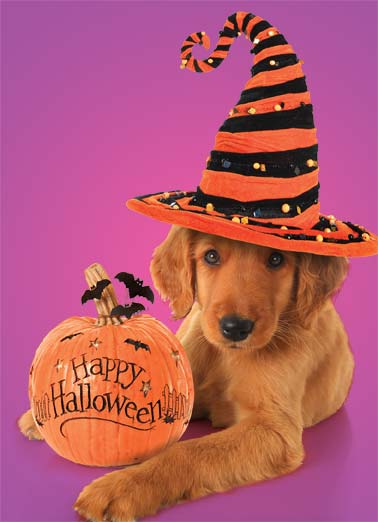 Paws to Have Funny Dogs   A dog with a halloween hat and a pumpkin. | dog halloween candy paw paws fun   Halloween's here- Paws to have a fun time!