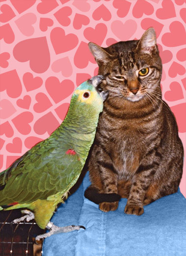 Peck (LV) Funny Kevin Card Love A picture of a cat getting a little 'peck' on the cheek from a parrot. | parrot cat love peck cheek love heart hearts kiss sweet Sending you a little peck on the cheek.