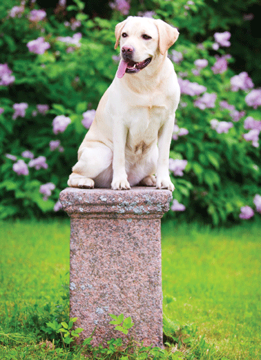 Pedestal Funny Compliment Card  You deserve to be put on the pedestal today! | dog pedestal so wonderful happy birthday smiling outside tongue  You deserve to be put on the pedestal today!