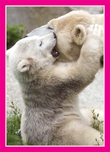 Polar Hug (MD) Funny Kevin Card Love A picture of a young polar bear kissing their mother. | polar bear hug kiss love mother mother's day arctic cold happy cute animals  Happy Mother's Day with a big hug and kiss for me.