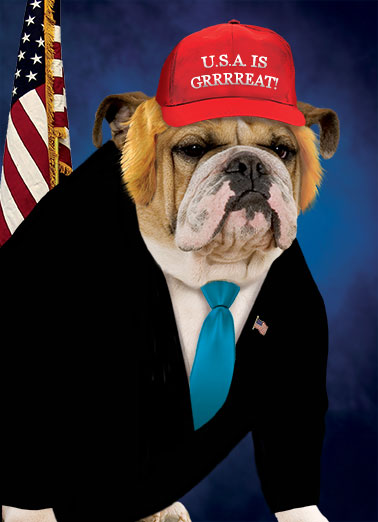 Funny Funny Political   Hope your Birthday's GRRREAT again! | dog, president, trump, donald, bulldog, funny, meme, pet, animal, flag, USA, America, suit, tie, wig, hat, make america, lol, political, humor, jokes, great, frown, scowl, portrait, white house, pose, background, presidential, Hope your Birthday's GRRREAT again!