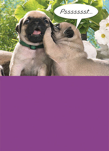 Pssst Funny Birthday Card Simply Cute Pugs, Love, Whisper, Cute I LOVE YOU!!! Happy Birthday