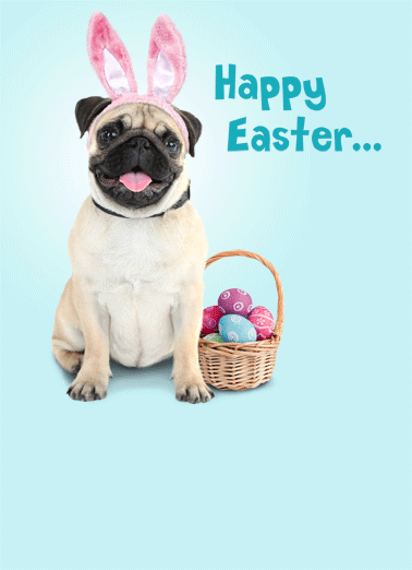 Pug Easter Funny Easter  Dogs   Happy Easter from Pugs Bunny