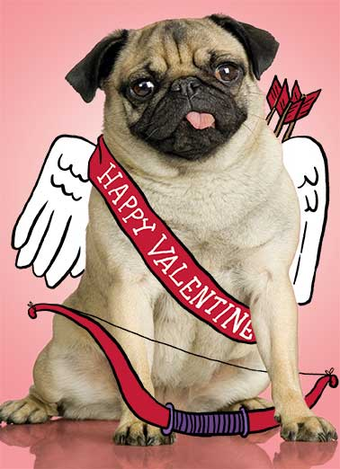 Val Pug Funny Valentine's Day Card    It's Valentine's Day - Look out for Cupug!