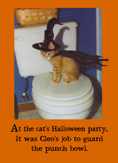Funny Halloween Card  Cleo guards the punch bowl at the Halloween party! | Cat, hilarious, meme, halloween, witch, funny, cute, costume, toilet, humor,