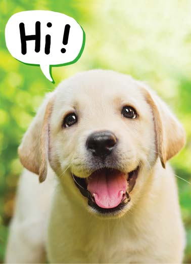 Puppy Smile Funny Just for Fun Card    Hope you're having a GOLDEN day!