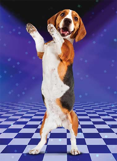 Funny Birthday Card Dogs Raise the Woof with this Hilarious Dancing Beagle Card! | Dog, National Dog Day, Puppy, Beagle, Birthday, Dancing, Dance Floor, Hilarious, Funny, Silly, Cute, pup, LOL, meme, dance, joke, sending, Raise the Woof... Your Birthday's here!