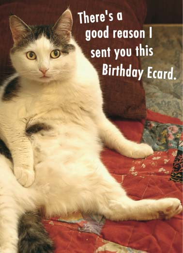 Funny Cats Ecards Cardfool