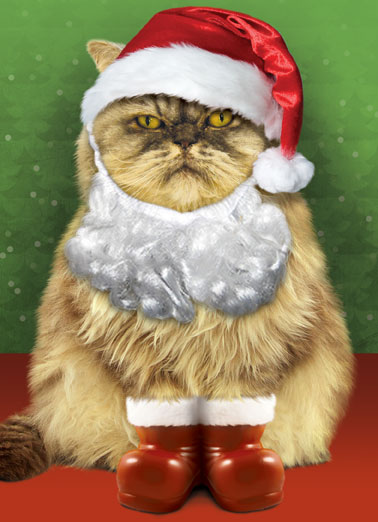 Santa Cat Funny Christmas Card Cats Mew-ry Christmas from Santa Claws.  Santa Cat is here to wish you a Merry Christmas and Happy New Year!  |  Santa Cat Christmas Card