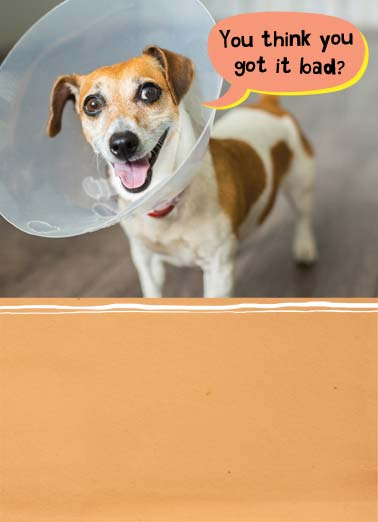 Scratch Funny Get Well Card  Dog with cone on his head. | cone get well soon bad dog k9 scratch butt better  At least you can still scratch your butt.
