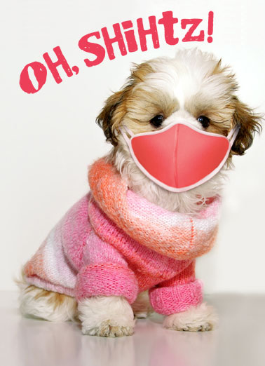 Shihtz Dog Funny  Card  Make someone a personalized greeting card just in time for their birthday! | shelter in place quarantine face mask social distancing funny silly dog dogs   It's your quarantine birhday!
