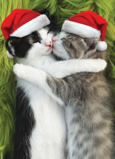 Snugs and Kisses XMAS Funny Christmas Card  A picture of two cats wearing Santa caps giving each other a hug. | cat snug snuggle hug santa cap kiss kisses Snugs and Kisses to you at Christmas!