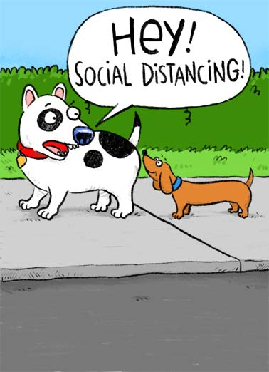 Social Distancing Dog Funny  Card  An illustration of a dachshund sniffing another dogs but. But the other dog want the dachshund to be socially distant. | dachshund dog sniff butt illustration quarantine social distance distancing coronavirus covid virus sick pandemic funny birthday happy I don't mean to stick my nose where it doesn't belong but aren't you a year older?