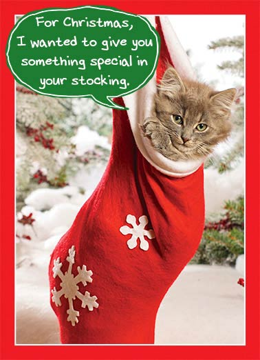 Something Special Funny Cats Card