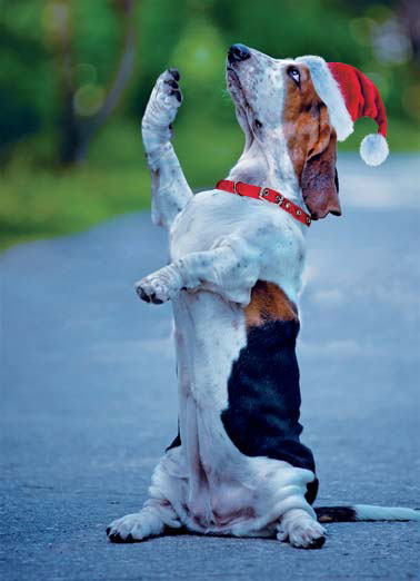 Sparky Funny Christmas Dog Flips Off Santa